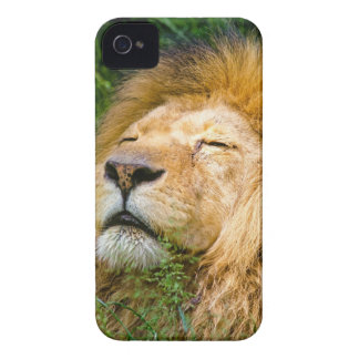 Dope Lion in the grass iPhone 4 Cover