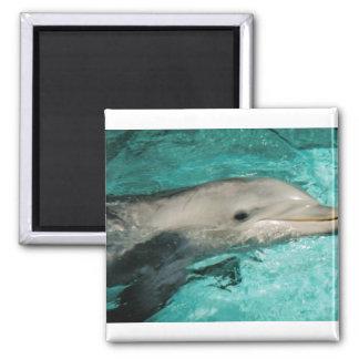 Dophin Blue Sea Ocean Magnet
