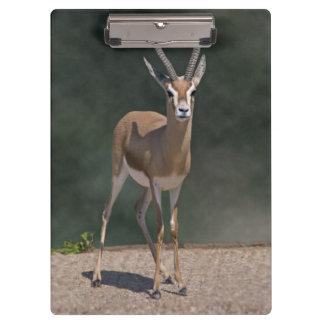 Dorcas Gazelle Clipboard