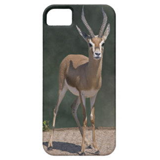 Dorcas Gazelle iPhone 5 Case