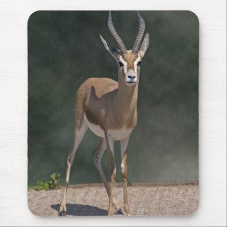 Dorcas Gazelle Mousemat Mouse Pad