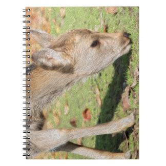 Doreen Notebook