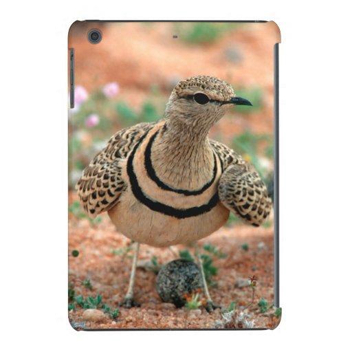 Double-Banded Curser (Rhinoptilus Africanus) iPad Mini Cover