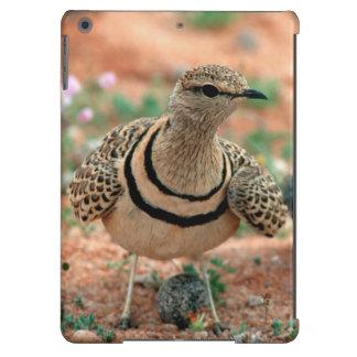 Double-Banded Curser (Rhinoptilus Africanus) iPad Air Cover