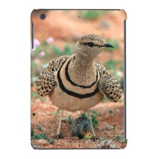 Double-Banded Curser (Rhinoptilus Africanus) iPad Mini Retina Cover
