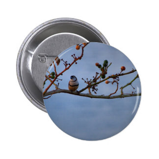 Double-barred finch on branch 2 inch round button
