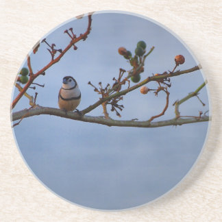 Double-barred finch on branch coaster