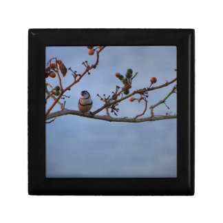 Double-barred finch on branch gift box