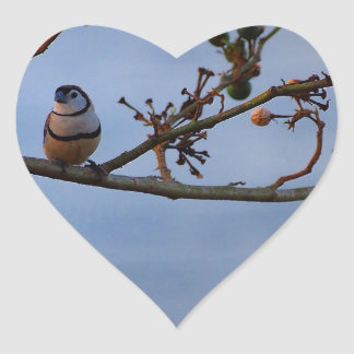 Double-barred finch on branch heart sticker