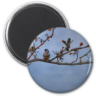 Double-barred finch on branch magnet