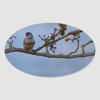 Double-barred finch on branch oval sticker