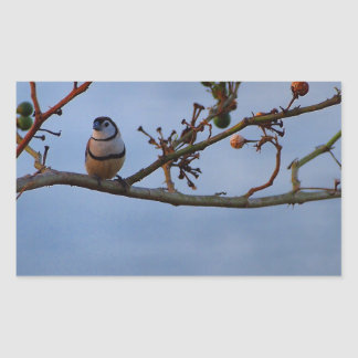 Double-barred finch on branch sticker