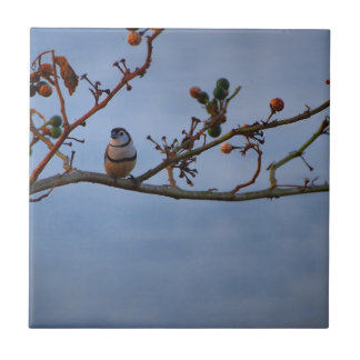 Double-barred finch on branch tile
