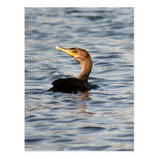 Double Crested Cormorant Bird Photo Postcard