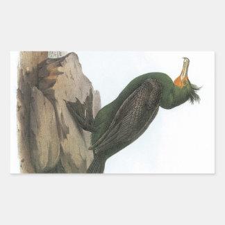 Double-crested Cormorant by Audubon