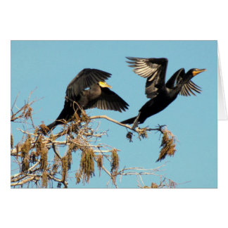 Double Crested Cormorants Take Flight (2537) Card