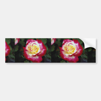 Double Delight Hybrid Tea Rose 'Andeli' Roses Bumper Sticker