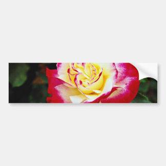 Double Delight Hybrid Tea Rose 'Andeli' White flow Bumper Stickers