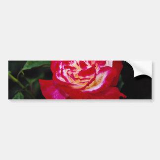 Double Delight Hybrid Tea Rose 'Andeli' White flow Bumper Sticker