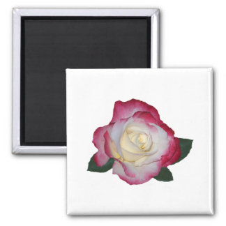 Double Delight Rose Magnet