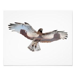 Double Exposure Hawk Photo Print