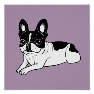 Double Hooded Pied Frenchie Poster