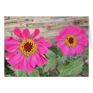 Double pink blooms card