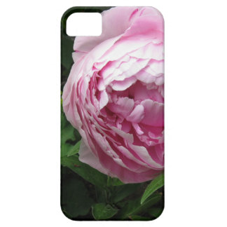 Double Pink Peony - Photograph iPhone 5 Covers