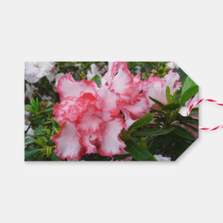 Double Red and White Azaleas Spring Floral Gift Tags