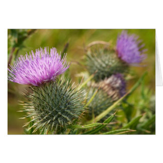 Double Thistle Card