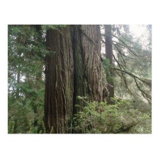 Double Tree Postcard