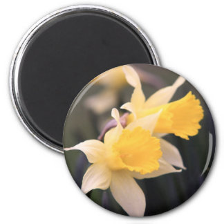 Double Wild Daffodil Magnet