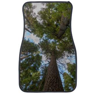 Douglas Fir tree canopy Car Liners
