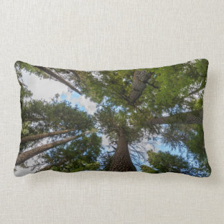 Douglas Fir tree canopy Throw Pillows
