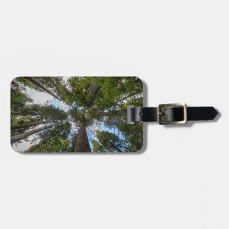 Douglas Fir tree canopy Travel Bag Tags
