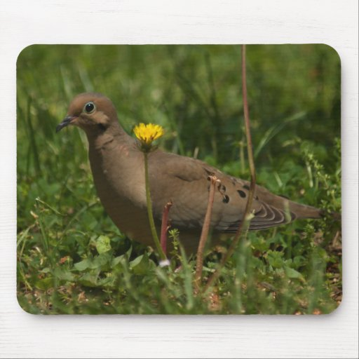 Dove and a daisy mousepad