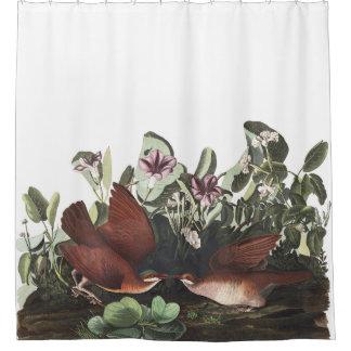 Dove Birds Audubon Wildlife Shower Curtain