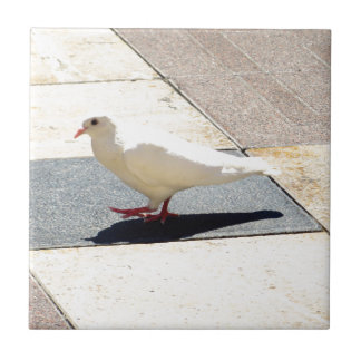 Dove Ceramic Tile