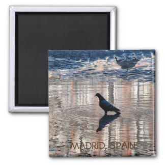 Dove in a pool of the Greater Place, Madrid Magnet