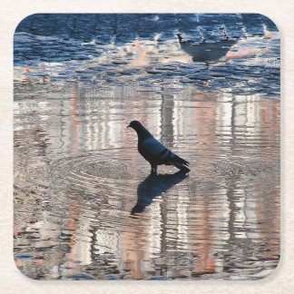 Dove in a pool of the Greater Place of Madrid Square Paper Coaster