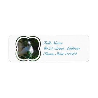 Dove Custom Return Address Label