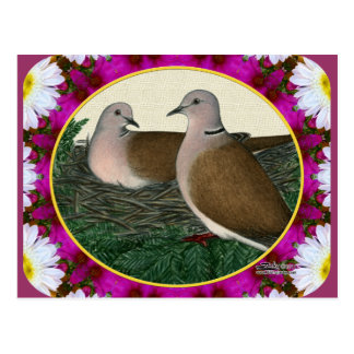Dove Nest and Flowers Postcard