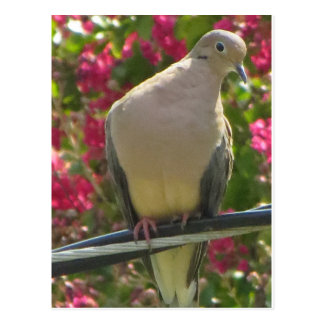 Dove On Wire Postcard