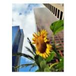 Downtown Los Angeles Skyscrapers Postcards