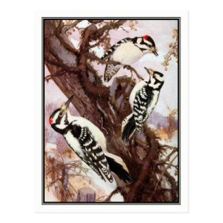 Downy and Hairy Woodpeckers - R. Bruce Horsfall Postcard