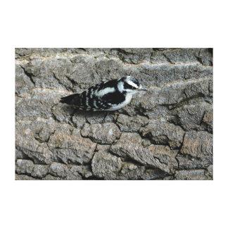 Downy Woodpecker 60 x 40 Wrapped Canvas