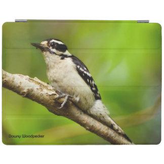 Downy Woodpecker iPad Smart Cover iPad Cover