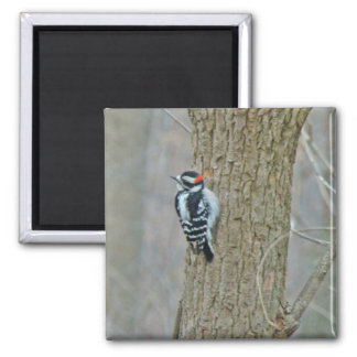 Downy Woodpecker Items Square Magnet