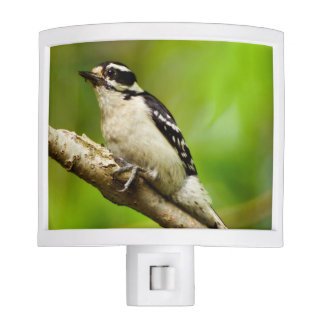 Downy Woodpecker Night Light