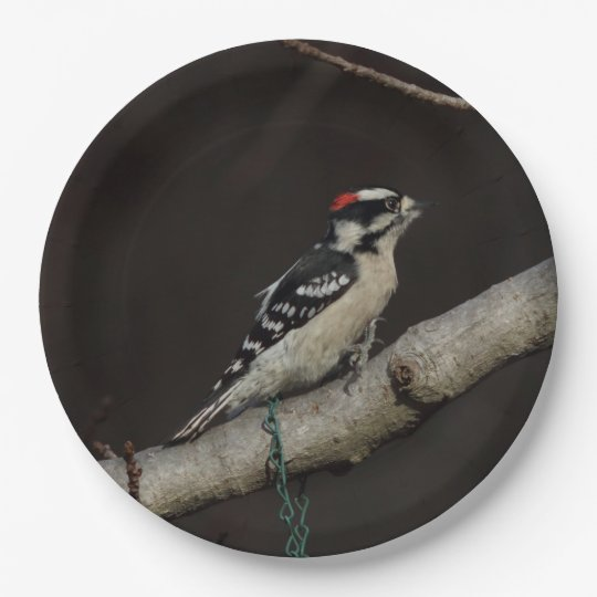 Downy Woodpecker, Paper Plates. 9 Inch Paper Plate